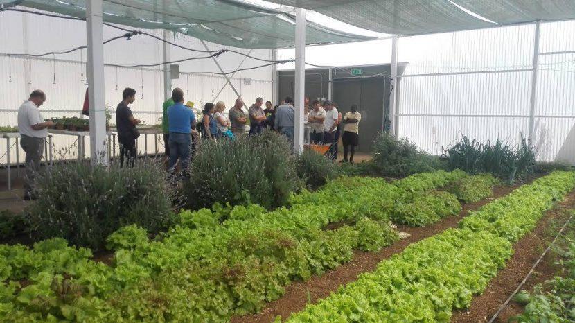 Taller cultivo de plantas aromaticas